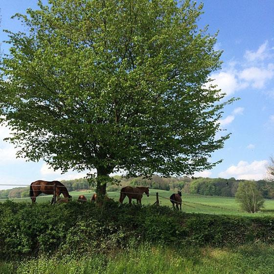 paarden in Mechelen