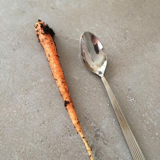 worteltje
